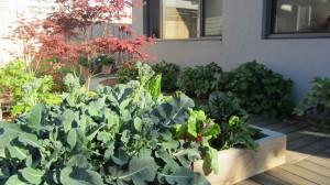 Carol's Evolving Garden