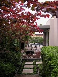 Lynn's Evolving Garden